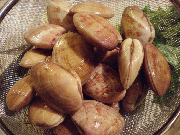 Clams (palourdes in French)